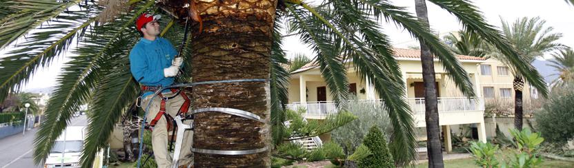 viveros y jardiner a azalea benic ssim castell n